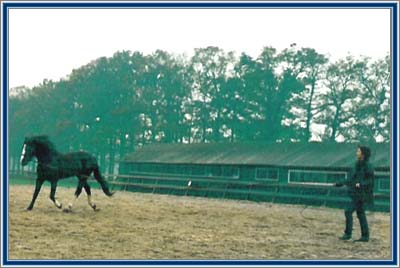 Lad's Black Buster was taught to trot on command at the lunge line.