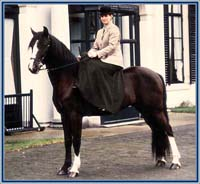 "Lad's Black Buster with rider Linda van der Horst in the year 1988 - background: Landgoed (= estate) Vollenhove, province Utrecht, the Netherlands - as you can see: no shoes! Buster has got a ""ring-eye"" on the left, his right eye is more pigmented, and pics from his left side often show white like here."