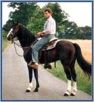 Lad's Black Buster with western saddle and bosal, rider Stephan Vierhaus - location: Borken, Germany - year 1991 - no shoes again!